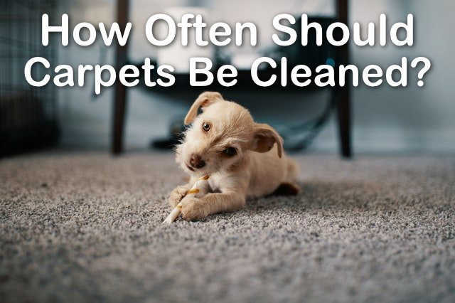 Carpet Cleaning Frequency Guidelines Vancouver Wa
